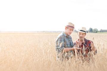 Mature farmer showing wheat crop in field to senior farmer