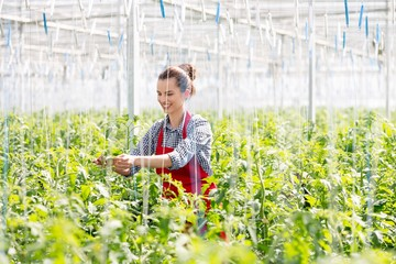 Young farmer standing in Greenhouse
