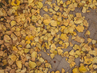 Top view of autumnal golden dry leaves on the pavement