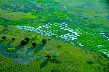 Deurstickers Groene Arusha city