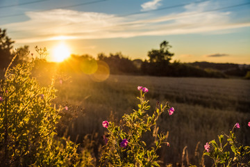 Foto op Aluminium Natuur sunset over the field