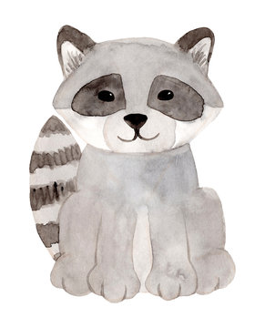Watercolor hand painted raccoon. Racoon Isolated on white background.