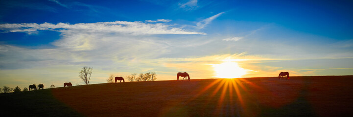 Thoroughbred Horses Silhouette by the Setting Sun