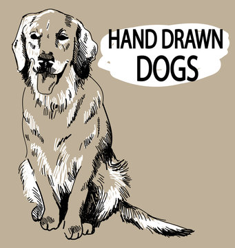 Retriever. The dog sits sticking his tongue. Drawing by hand in vintage style.