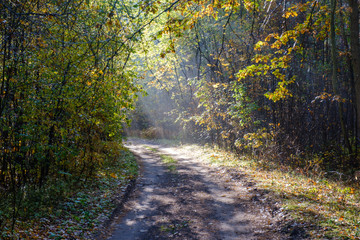 Keuken foto achterwand Bos in mist Beautiful meandering rural road in sun beams in autumn forest in the morning.