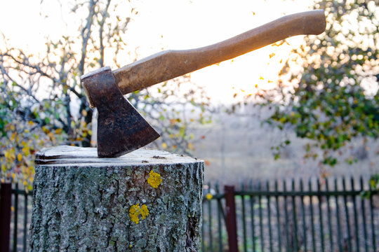 An ax sticks out from a stump of a freshly cut tree. Felling trees. Wildlife conservation.
