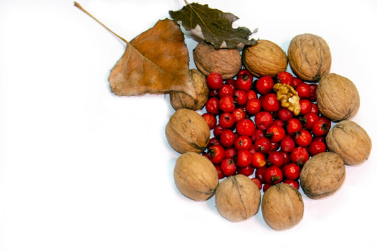 Autumn isolated photo frame of leaves, rowan and nuts.