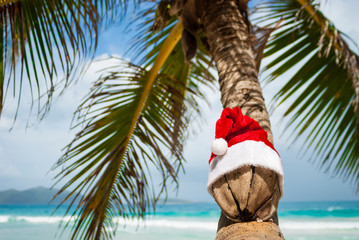 Wizened old coconut with Santa hat transforming a curving palm tree into a tropical Christmas tree