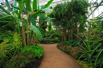 Interior of a tropical glass house with a path leading through so that visitors can view the various plants and trees cared for by the experts, without causing damage.