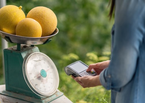 Crop adult woman in casual clothes weighing three fresh yellow round melon and billing while using terminal for contact less payment on blurred green background