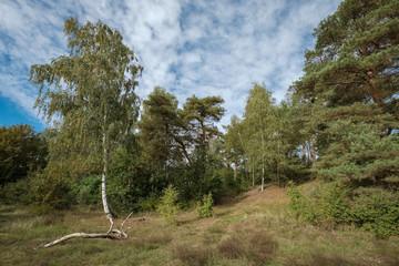 Steil abfallende Böschung mit Bäumen am Havelufer bei Lindwerder