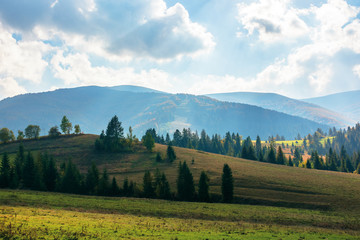 rural area of carpathian mountains in autumn. wonderful landscape of borzhava mountains in dappled light observed from podobovets village. agricultural fields on rolling hills near the spruce forest