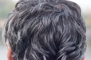 Grey hair. Gray hair on the head. Backside portrait of man