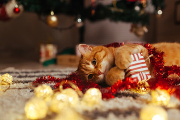 Ginger cat playing with garland and gift box under Christmas tree. Christmas and New year concept