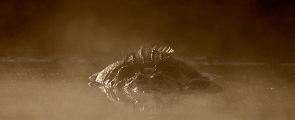 Türaufkleber Crocodile Saltwater Crododiles in Kakadu, Northern Territory Australia. ( Crocodylus porosus )