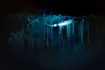 Glow worms and their sticky threads used to catch prey Wall mural