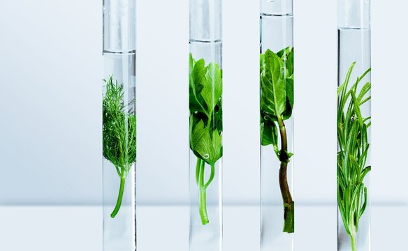 Algae.