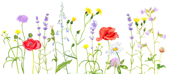 wild plants and flowers, drawing by colored pencils Fotomurales
