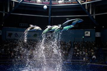 ドルフィンジャンプ|イルカショーの群れのイルカのジャンプの写真| Photo of a jumping dolphin, dolphin show.