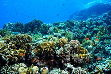 Deurstickers Onder water Coral Reef at the Red Sea Egypt