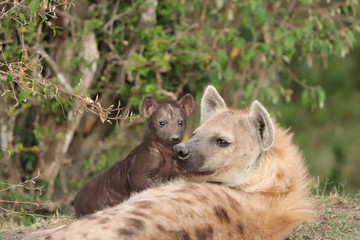 Spotted hyena mom and cub.