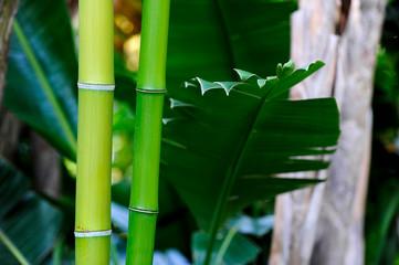 jardines costa brava bambu