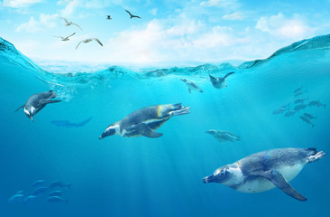 Photo sur Toile Pingouin A flock of African penguins diving among fish. Ocean underwater with marine animals. Sun rays passing through the water surface.