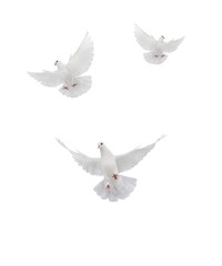 Wall Murals Roe fthree ree flying white dove isolated