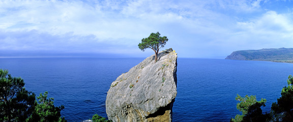 Fototapeta Panoramic view of a lonely tree growing on a rock. Crimea obraz