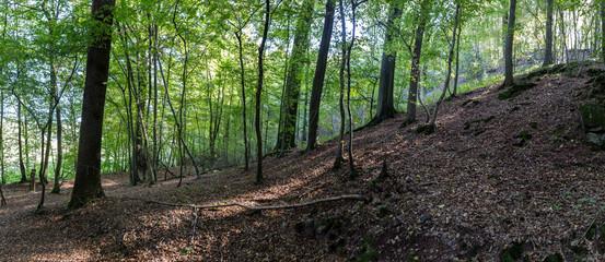 Promenade à l'abbaye d'Aulne