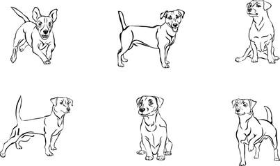 Jack Russell Terrier, dog, vector, black, silhouette, line, figure