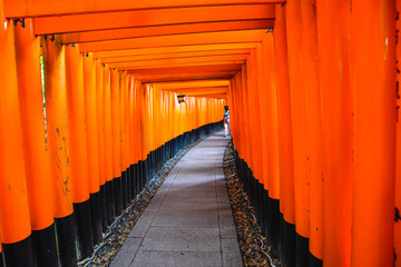 Foto auf Leinwand Rot The iconic shrine in Kyoto, made famous for its thousands of orange and black torii gates which climb to the summit of Mt Inari