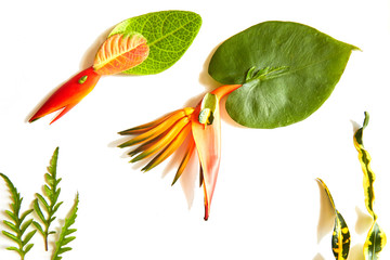 Charming image of sea squids and seaweeds created with tropical botanical materials