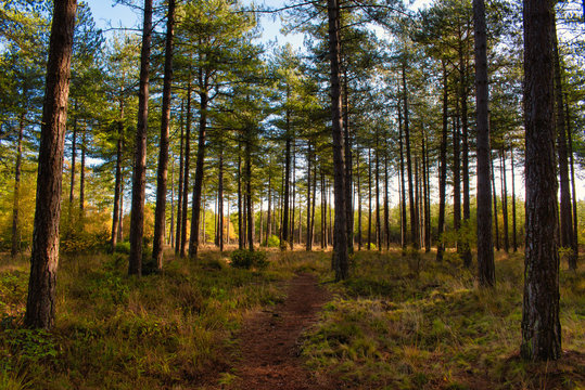Autumn Woodland Trail