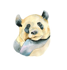 Panda hand painted watercolor illustration isolated on white background. Watercolor animal silhouette sketch. Wildlife art illustrations. Vintage graphic for fabric, postcard, greeting card, book