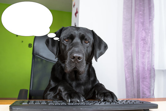 Funny picture with bubble idea dog looking at computer screen.