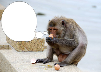 Funny picture with bubble idea the monkey eats an egg.