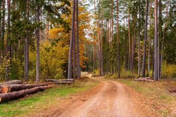 Keuken foto achterwand Weg in bos Puszcza Knyszyńska, Polska złota jesień, Podlasie, Polska