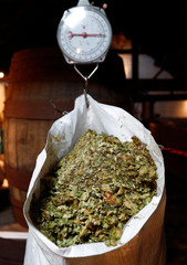 A bag of hops is weighed at the traditional Cantillon brewery in Brussels