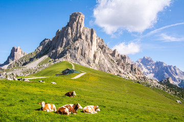 Fotobehang Alpen Beautiful mountain view, resting cows and green alpine meadows, Giau Pass, Dolomites, Italy