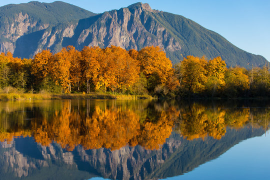 The calm, still waters of a large pond near Snoqualmie, Washington, reflect the beautiful fall colors of shoreline trees and Mt. Si in the distant background. Close-up..