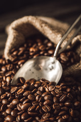 Fototapete - Coffee beans with scoop.