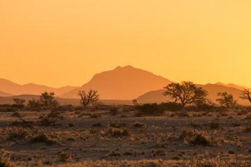 Poster de jardin Desert de sable Sunset at the Namib desert plains, Namibia, Africa