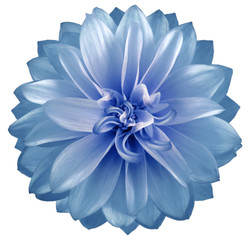 watercolor dahlia flower blue. Flower isolated on white background. No shadows with clipping path. Close-up. Nature.