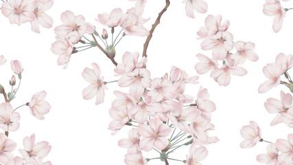 Floral seamless pattern, Somei Yoshino sakura flowers with branch on white