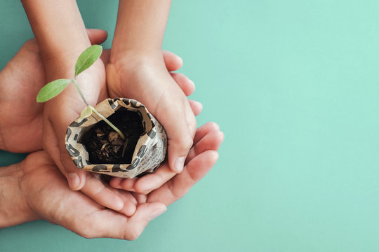 hands holding seedling plants in newspaper pot, montessori education , CSR  Corporate social responsibility, Eco green sustainable living, zero waste, pastic free, world food day