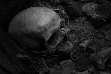 Skulls and skeletons bones were unearthed from the graves in the horrible cemetery with ivy growing. In back and white tone. (Death is the great leveler) concept.