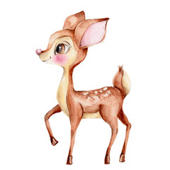 Cute little deer; watercolor hand draw illustration; with white isolated background