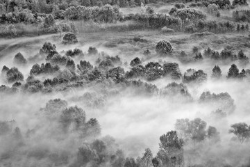 Foto op Plexiglas Donkergrijs The foggy forest (Black and white photography)