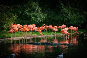 In de dag Flamingo flamingo standing in water with reflection
